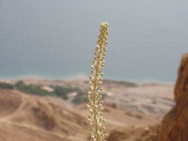 En Gedi 2 - Israel